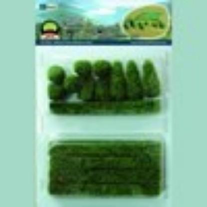 "Picture of Boxwood Plants (15 pk) 1/2"" - 1 1/2"""