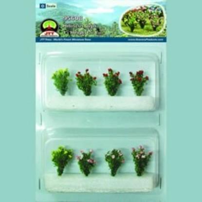 "Picture of Hibiscus Plants (8 pk) 1"""