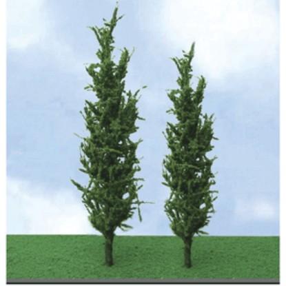 "Picture of Poplar Trees - Pro Elite -- 5 - 6"" 12.7 - 15.2cm pkg(3)"