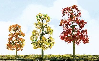 """Picture of Premium Deciduous Trees -- 3.5""""-4"""" Autumn Sycamore pkg(2)"""