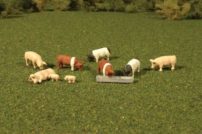 Picture of Pigs -- pkg(9)