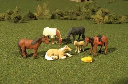 Picture of Horses -- pkg(6)