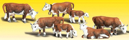 Picture of Hereford Cows (7)