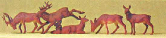 Picture of Deer (5)